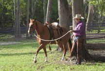 Horse training file / by Brenda Tylke