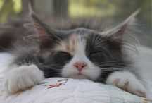 """Cats sleep anywhere / """"Cats sleep anywhere, any table, any chair, top of a piano, window-ledge, in the middle, on the edge, open drawer, empty shoe, anybody's lap will do, fitted in a cardboard box, in the cupboard with your frocks- Anywhere! They don't care! Cats sleep anywhere."""" Eleanor Farjeon / by Janelle Stephens"""