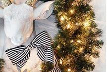 holiday / by Tasha Toth