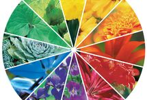 Color Theory / by Mayesh Wholesale Florist
