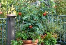 Growing Organic Vegetables / by Kelli Wright