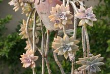 Plants / by Julia Francom