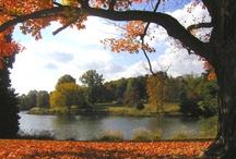 Fall Fantasy / by Duke Farms