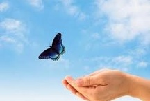 Butterflies / by Carol Deckert: Contacts to Connections