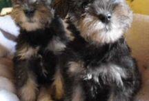 Puppies / by Kellie Recio