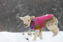 Sheep! / Because sheep are cute / by Karen Meyers