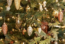 Nature Christmas theme / by Evangelina Reyes