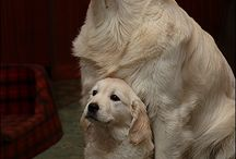 doggies / by Corrie Mcdonald