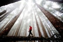 Why We Love Trees / There's nothing NOT to love about trees! / by The Davey Tree Expert Company
