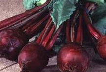 Beets / by gardenlady