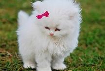 beautiful kitty / by Sarah Van Engelen
