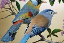 Birds / by Deborah R