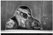 Adorable Animals / Animals / by Anna McDonald
