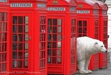 Polar Bears Rising / by Greenpeace