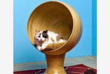 Meow / by Kylee Baumle
