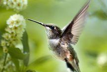 beautiful bird / by Junifeef Panaligan