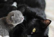 Animals that I love / by Melinda Sharp Hulit