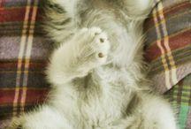 Kitty Love / by Jilliane Leverenz