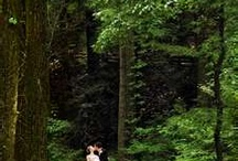 The perfect wedding in the forest / by Lisa Hensley