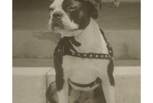 I <3 Bostons / Boston terriers are the best! / by Linda Brandt