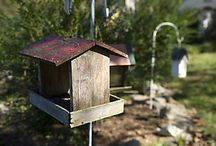 Backyard Birds / The know-how and products you need for attracting, feeding and caring for wild birds, as well as solutions to backyard bird problems, from Tractor Supply. / by Tractor Supply Co