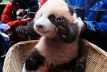 Pin for Pandas / by Melanie Peterson