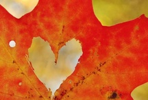 Autumn My favorite Season / by Janet Christman