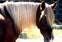 All the Pretty horses / by Jani Price