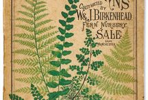 In Love with Ferns.... / by Marlene Christophers