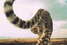 Animals / Cute or interesting animals / by Shayla Dye