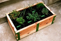 Gardening / by Jackie Meade