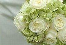 Lulu's Wedding / by Elizabeth Fassel