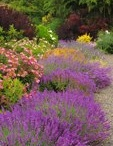 Inspirational Gardens (The Oregonian) / Ideas come in many styles / by The Oregonian