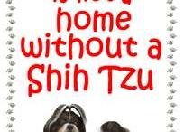 animals -shih tzu / by Cindy Hertz