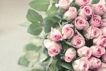 Garden & Flowers / by Parfum de Provence