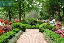 Gardens / by Pam Brisse