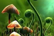 Mushroom Beauty!  / by SimoneDanielle` Rio