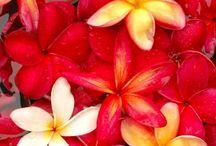 Florals / by Patricia Parker