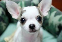 Cute animals..... / by Betty Thompson