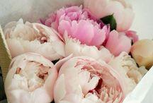 Flowers / by Din Muminmamma