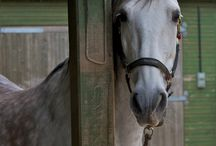 Horse care tips & tack / Anything & everything HORSE / by Shanna Carta
