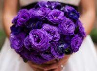 Purple Please / by Amanda Brinkley