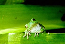 Frogs / by Jeanine Jager