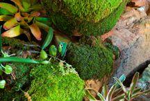 Gardening / by Tali Rothstein