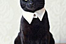 Meow Meow / by Todd Mellon