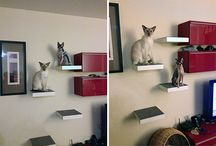 Cat-ify This. / The cats live here too, yannow.  / by Donna Newsom