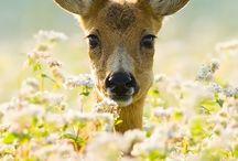 Cutie animals. / by Natalie Kischuk