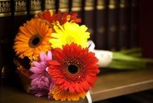 Gerber daisy wedding / by Janice Klusaw
