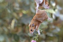 Hamsters / by Holly Means Hoppe