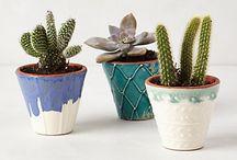 Garden + Plants / by Mary Dean Johnston